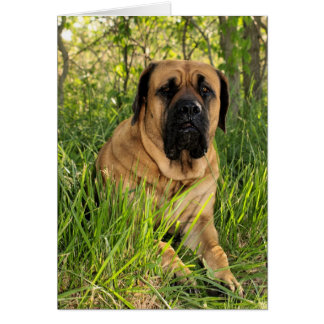 Cartes Grand chien anglais de mastiff - souhaits