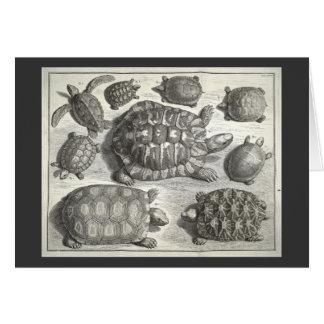 Cartes Gravure à l'eau-forte vintage de tortue