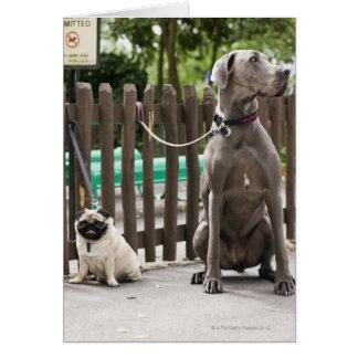 Cartes Great dane bleu et chiens de carlin sur des