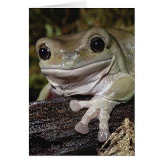 Cartes Grenouille d'arbre trapue. Grenouille de sourire.