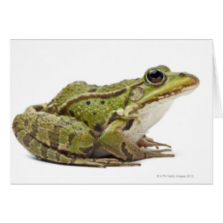Cartes Grenouille européenne commune ou grenouille