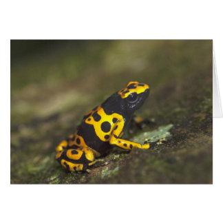 Cartes grenouille Jaune-réunie Dendrobates de dard de
