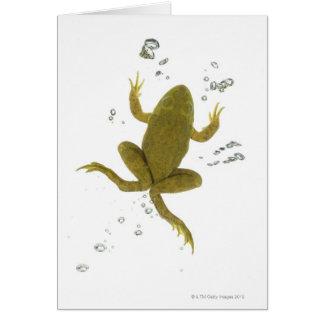 Cartes grenouille verte commune