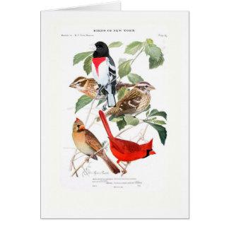 Cartes Gros-bec et cardinal