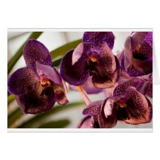 Cartes Groupe pur de fleur de cire de Vanda d'orchidée