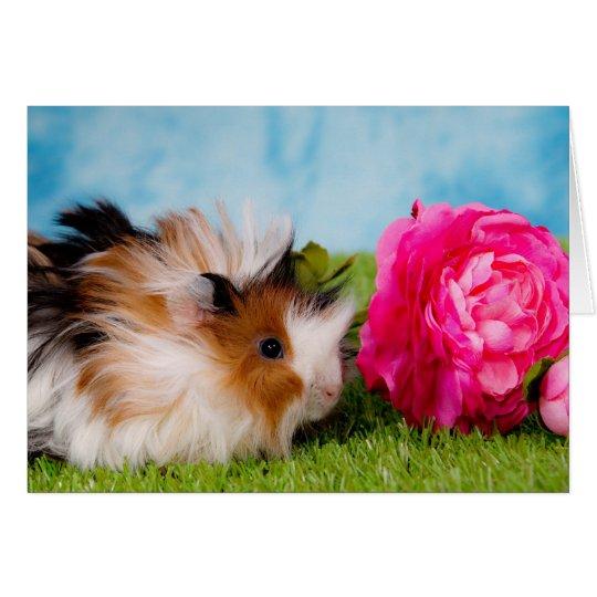 Cartes guinea pig