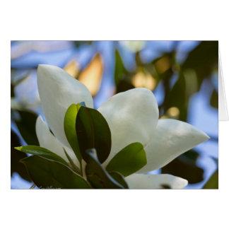 Cartes Habillement de cadeaux de magnolia du sud de ciel