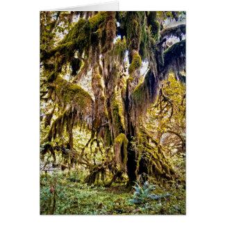 Cartes Hall de traînée de mousses, parc national