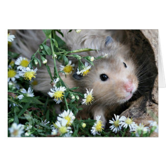 Cartes Hamster en fleurs