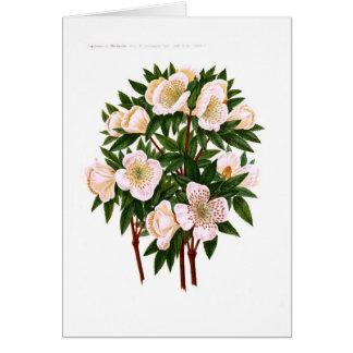 Cartes Helleborus Niger (rose de Noël)