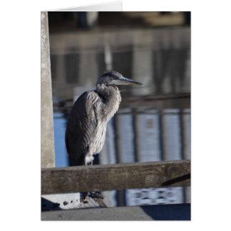 Cartes Héron de grand bleu grincheux