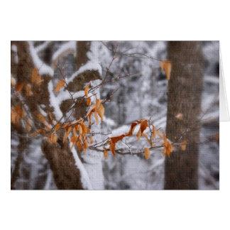 Cartes Hiver dans la forêt