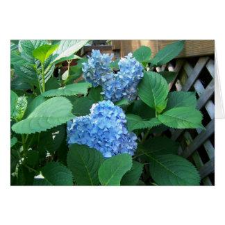 Cartes Hortensia bleu