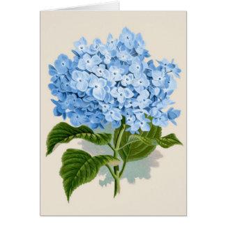 Cartes Hortensia bleu vintage