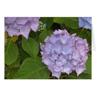 Cartes Hortensia mauve
