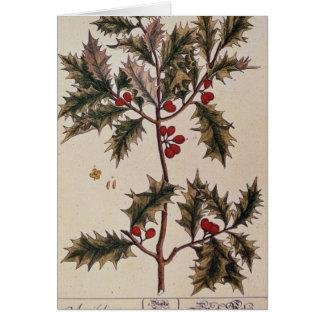 """Cartes Houx """"d'un de fines herbes curieux"""", 1782"""