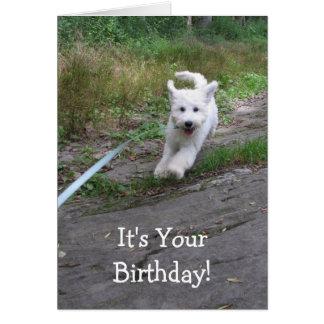 Cartes Humour d'anniversaire avec le chiot courant mignon