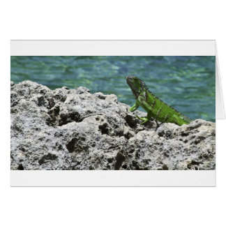 Cartes Iguane vert d'îles de Grand Cayman