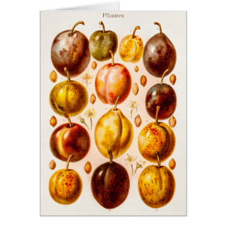 Cartes Illustration antique de fruit de prune de prunes