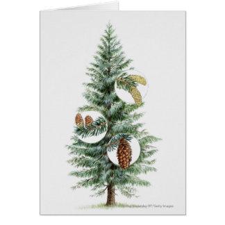 Cartes Illustration d'arbre conifére avec des cônes