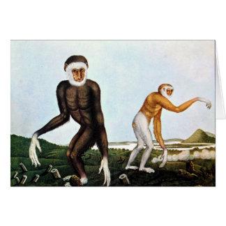 Cartes Illustration de Gibbons par Aloys Zotl