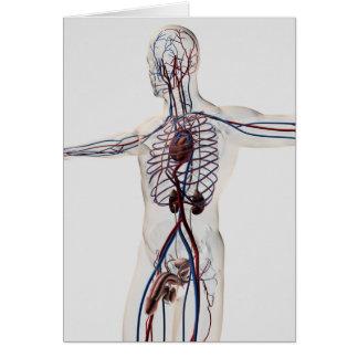 Cartes Illustration médicale : Appareil reproducteur