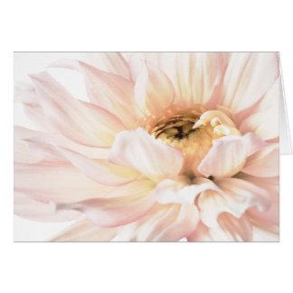 Cartes Illustration rose de dahlia - mots-clés : dahlia ;