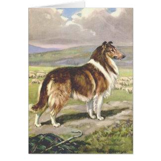Cartes Illustration vintage - chien rugueux de colley,