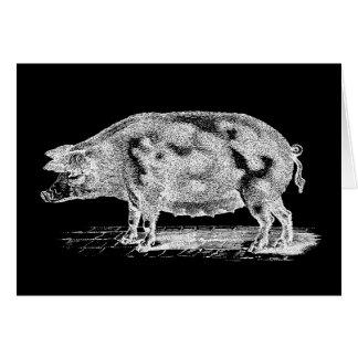 Cartes Illustration vintage de porc de 1800s - modèle de