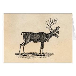 Cartes Illustration vintage de renne - Noël 1800's
