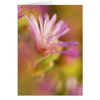 Cartes Image diffuse d'une fleur succulente colorée