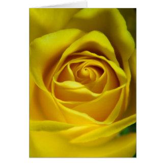 Cartes Image magnifique de macro de rose jaune