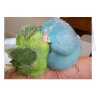 """Cartes Inséparables de Parrotlet sûrs dans des vos bras"""""""