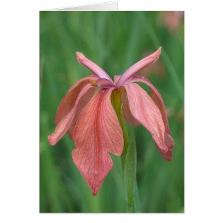 Cartes Iris de cuivre