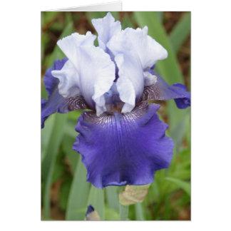 Cartes Iris pourpre