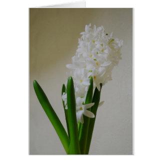 Cartes Jacinthe blanche