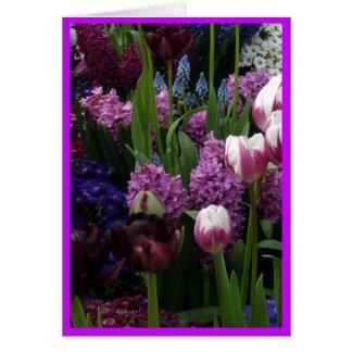 Cartes Jacinthes pourpres de tulipe