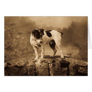 Cartes Jack le Jack vintage Russell Terrier