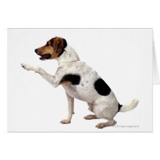 Cartes Jack Russell Terrier soulevant la patte