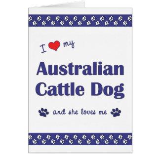 Cartes J'aime mon chien australien de bétail (le chien