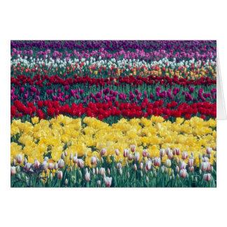 Cartes Jardin d'affichage de tulipe dans le comté de