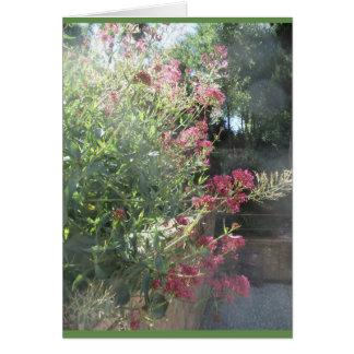 Cartes Jardin de Generalife, Espagne