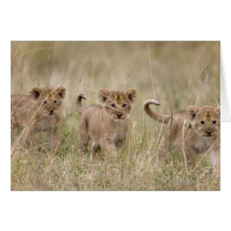 Cartes 'Jeu Reserve de l'Afrique, Kenya, Mara de masai
