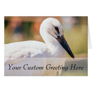 Cartes Jeune oiseau de cigogne, photographie animale de