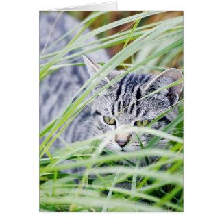 Cartes jeune portrait de chat