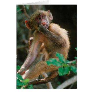Cartes Jeune séance de babouin de Chacma (Papio Ursinus)