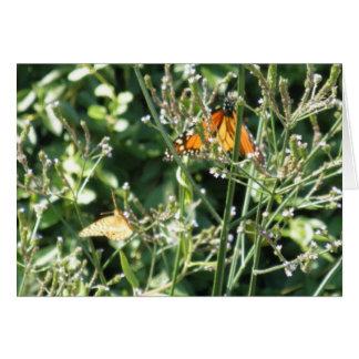 Cartes Jolis papillons de monarque