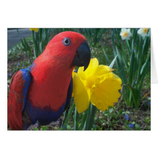 Cartes Jonquille d'Eclectus -- Grand