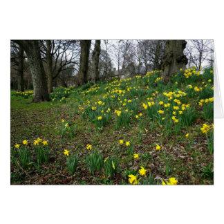 Cartes Jonquilles. Jardins de Sophia, Cardiff, Pays de