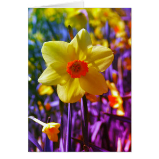 Cartes Jonquilles jaune-orange 01,0